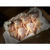 Colis de 5 Pigeonneaux entier - Saigné et Plumé - 500g environ